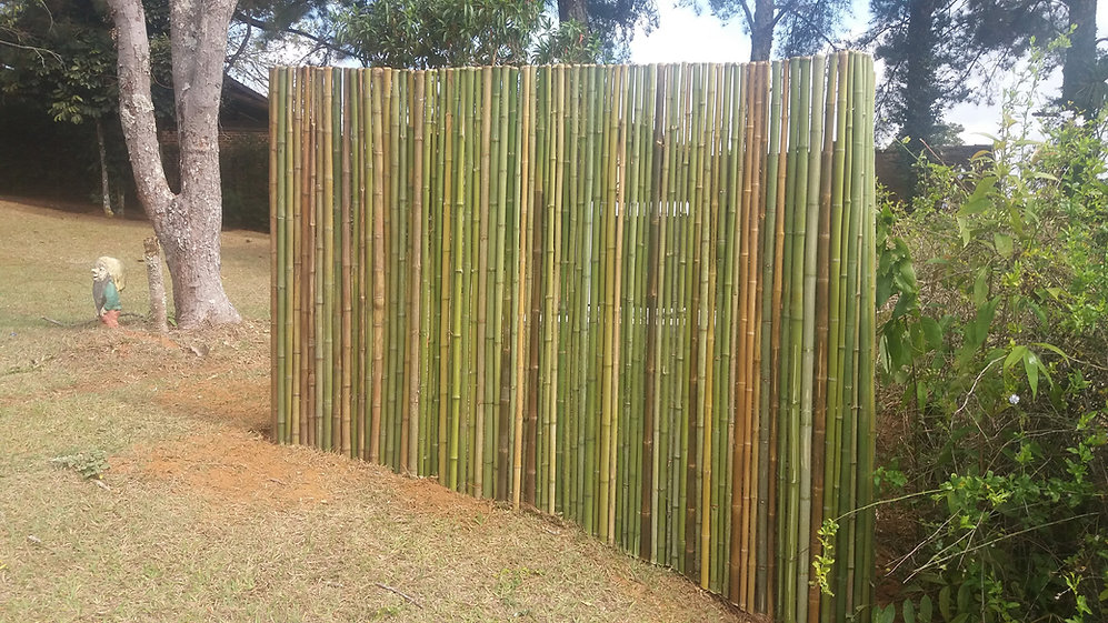 cerca de bambu