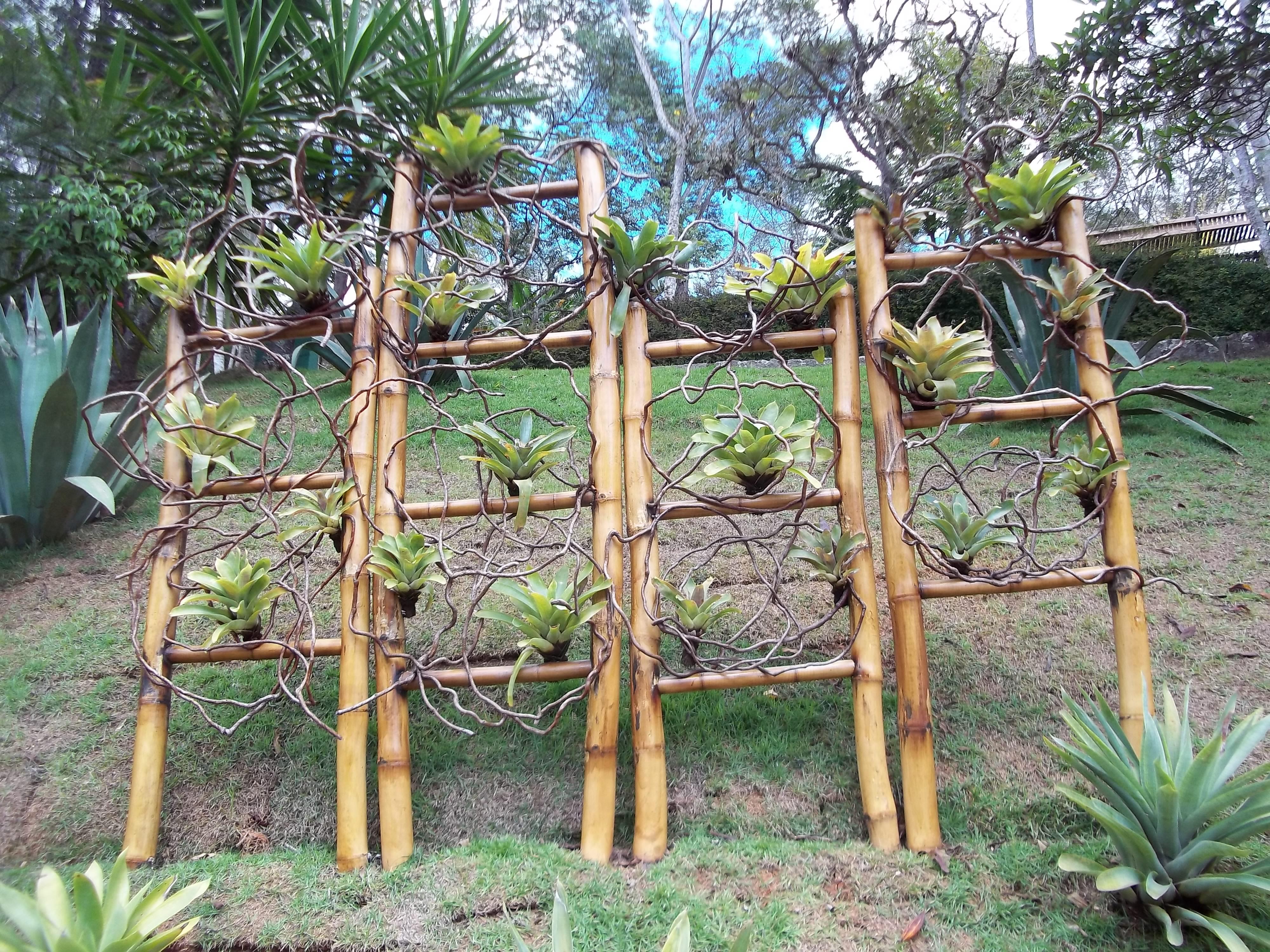 arranjo de bambu