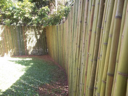 cerca de bambu natural