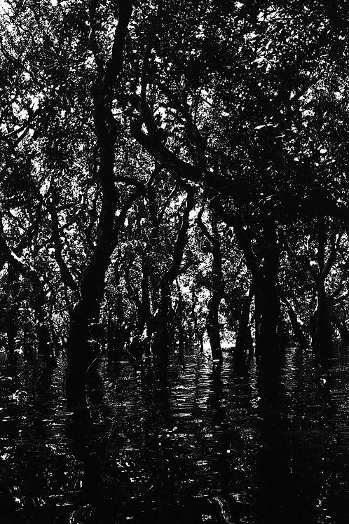 """Print 30x40cm """"Cambodia Tree"""""""