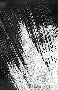 mCyanotype016.jpg