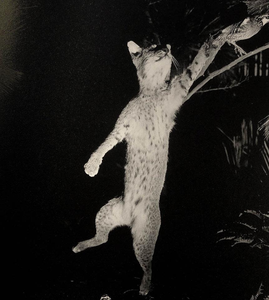 Rabbit-Hare-by-David-Billet-and-Ian-Klin