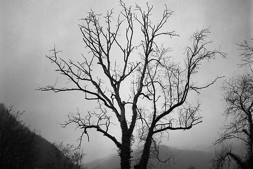 """Print 40x60cm """"Tree"""""""