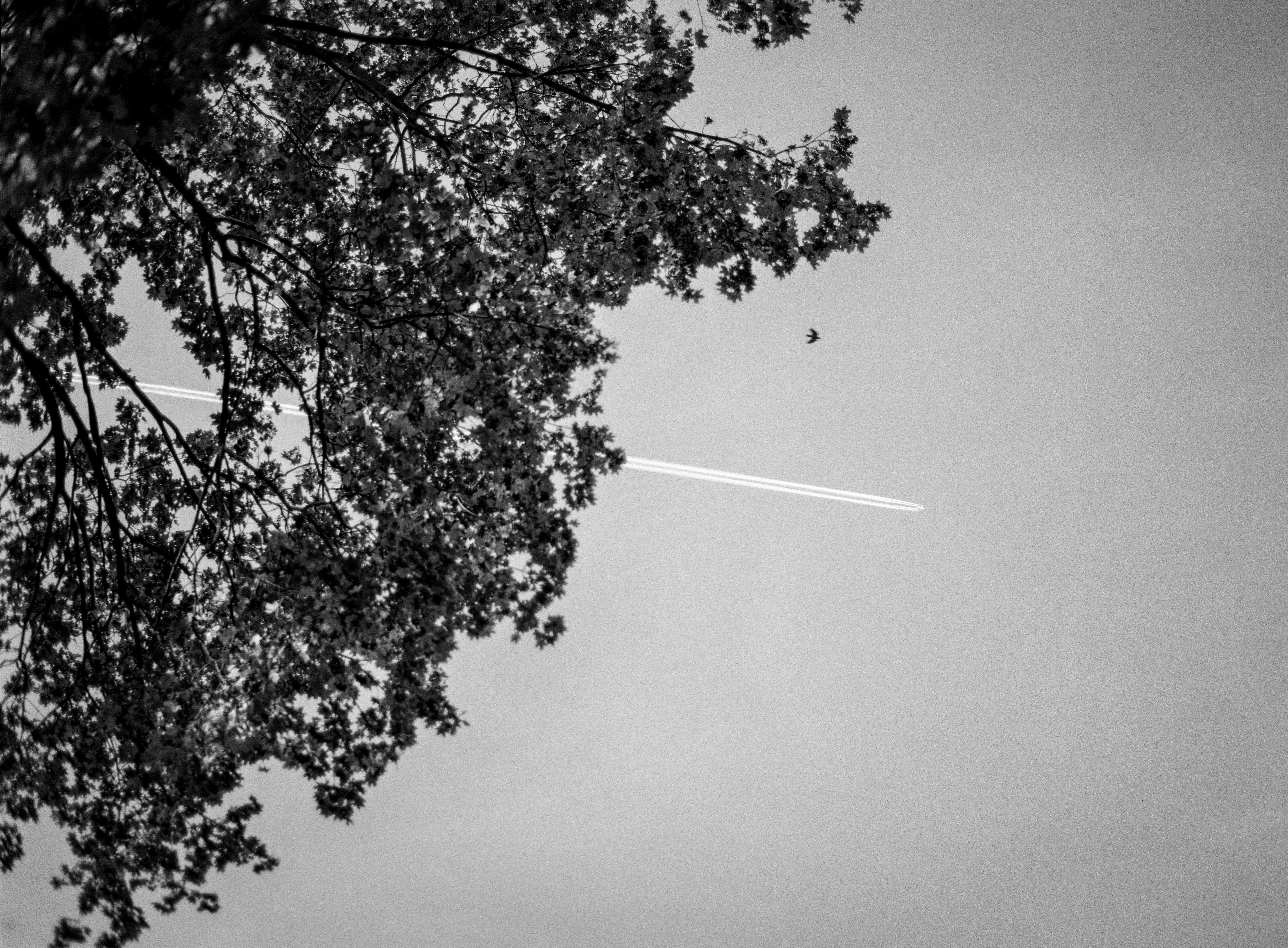 300DPI_©PaulineCaplet_037