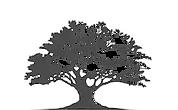Tree Consulting, HR poradenství, HR Consulting, Vzdělávání, Koučing, Training, Coaching, Human Resources, David Škrobánek