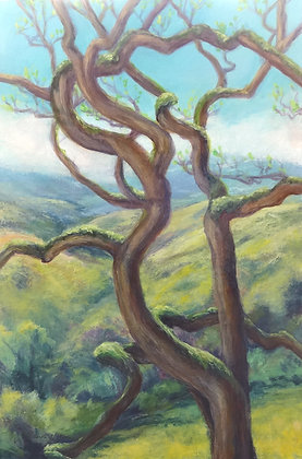 Rolling California hills with twisted oak tree in foreground