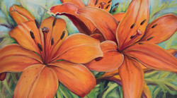 Tiger Lilies for Liz