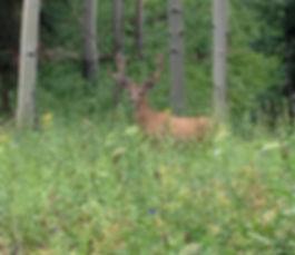 Colorado Mule Deer Hunting