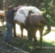 Colorado Elk Outfitter Packing Mule