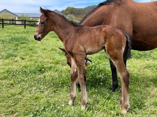 Fantastic first foals for Royal Meeting
