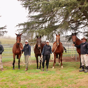 TOP MARES ARRIVE FOR FIERCE IMPACT