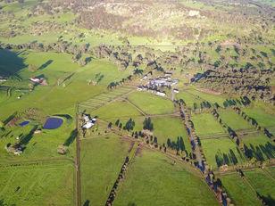 Inglis Ready to Run Sale Leneva Park 2020