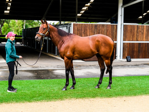 Top mares ready for impact