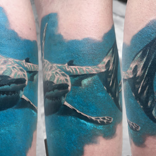 skeryone-shark-altogether.jpg