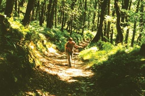 Walking East Lyn valley