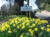 Dunster sign with daffodils