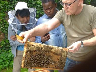 Bienen LUFO.jpg