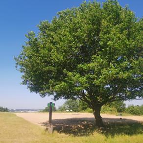 Horsenden Hill: #LdnGreenGround