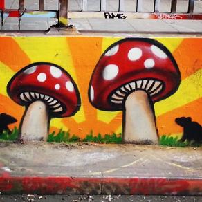 Urban Mushroom Hunting