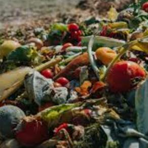4 December - Reduce food waste