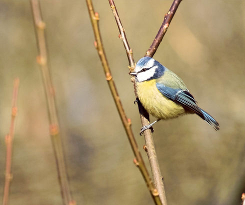 green and blue bird perched on tree branch_edited.jpg