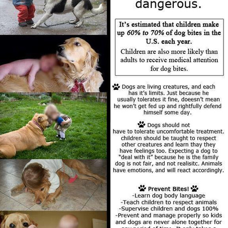 ALL Dogs have the Potential to BITE! Respect Their Boundaries.