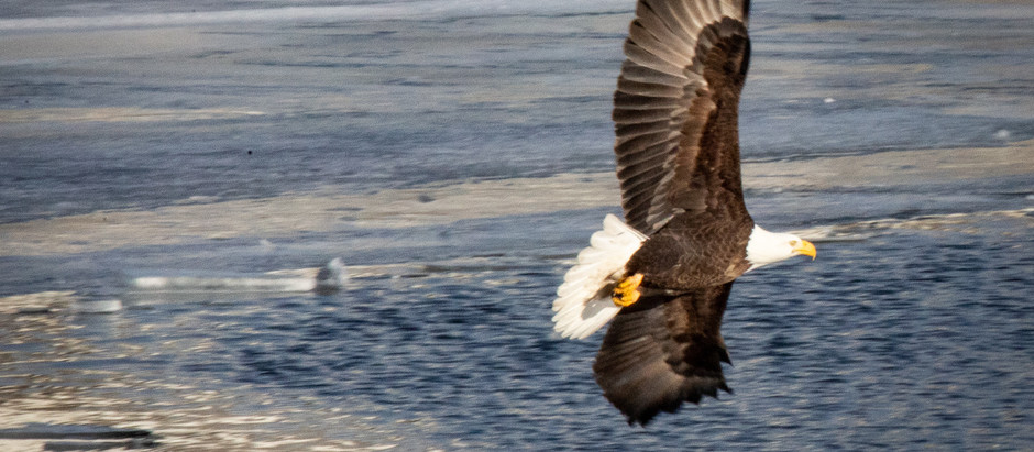 3 Things to Know About Keith County's Bald Eagles