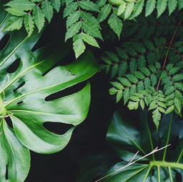 5 Zimmerpflanzen deluxe