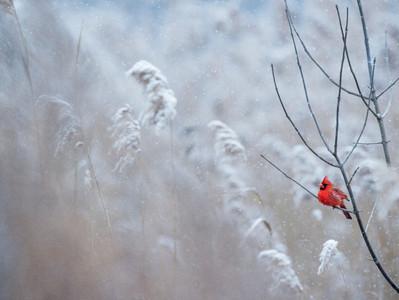 Eiskalt belebt - Wie der Winter dich gesund hält