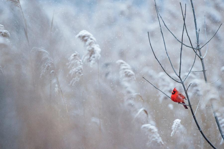 Winterlandschaft Schnee roter Vogel myGiulia
