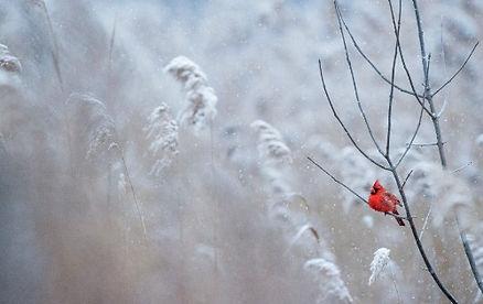 schnee-winter-eiskalt-vogel-foto-ray-hen