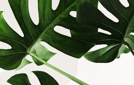 zimmerpflanze-deluxe-foto-chris-lee-myGi