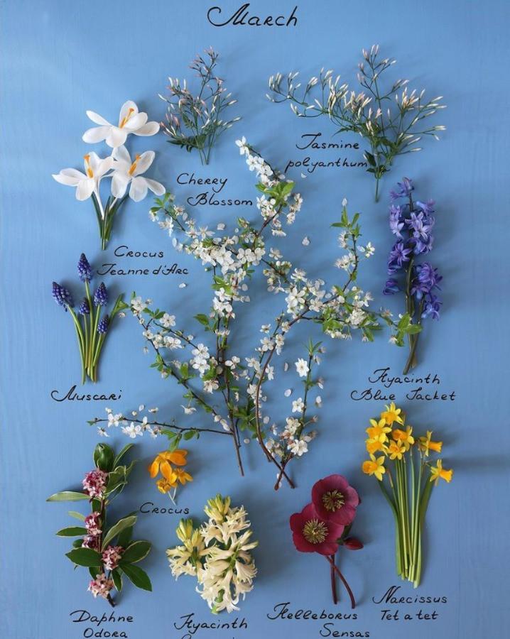 Blumen im März von Londonbloom - Frühlingsblumen