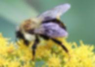 EntomologyTodayPic5.jpeg