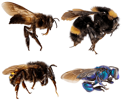 EntomologyTodayPic7.png