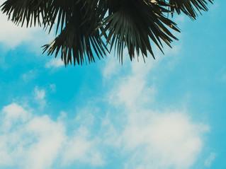 Blue carbon – The Mangroves