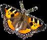 fjäril.png