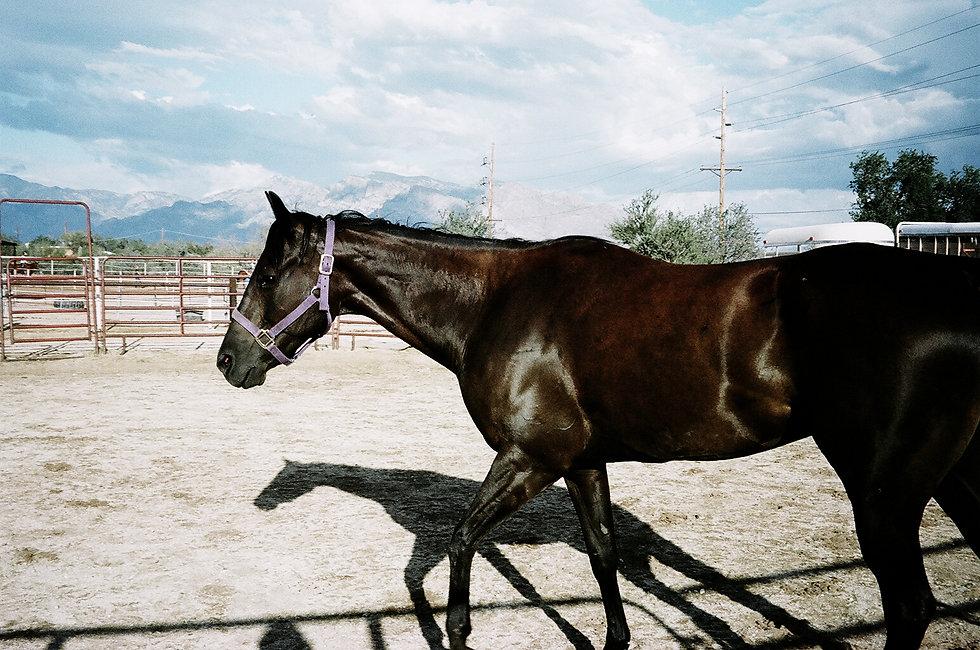 ©roeg_cohen_Lolas_Arz_horses_7-2014.jpg