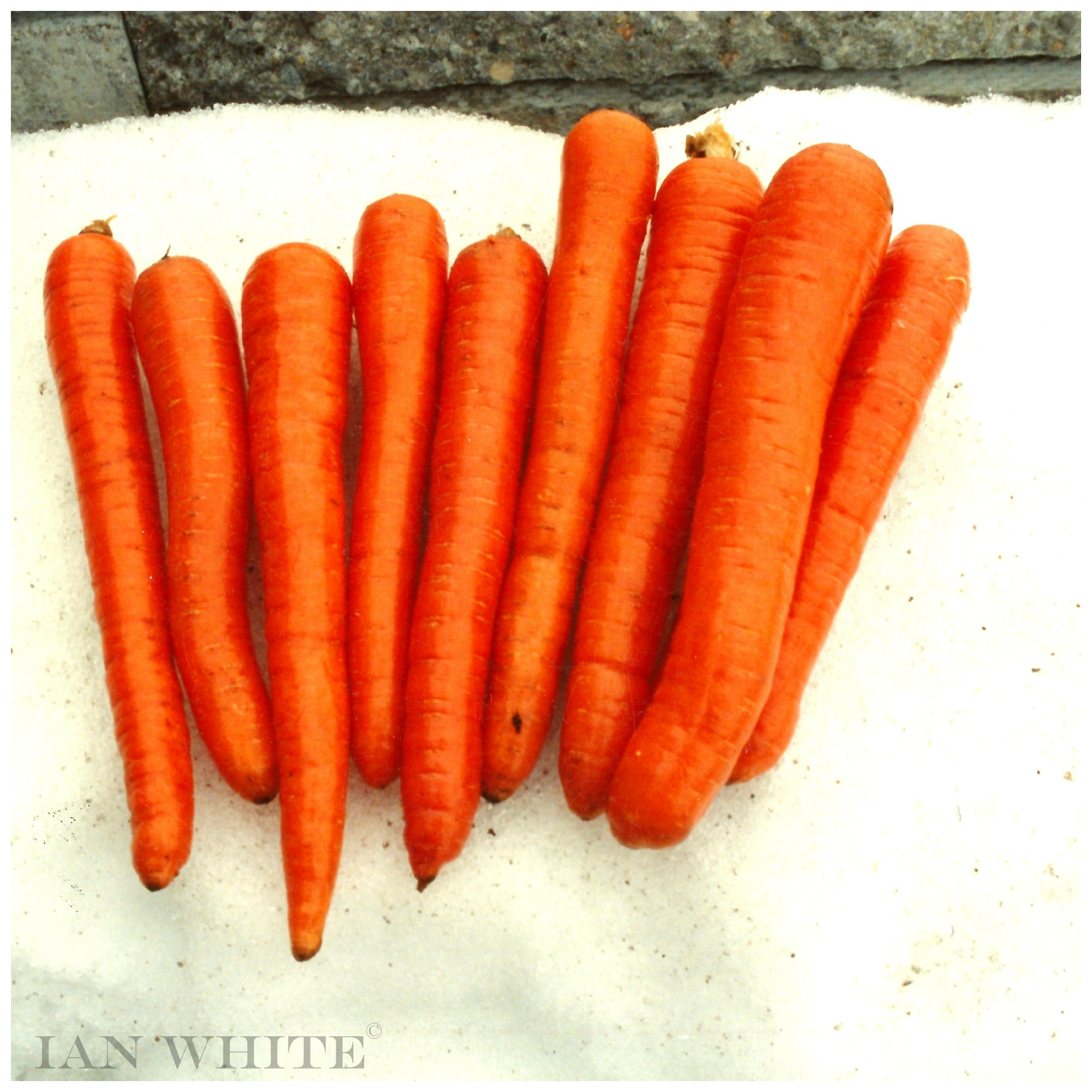 CARROTS STORED FOR FOUR MONTHS