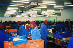 VEGETABLE EXPORT PACKING- ZAMBIA