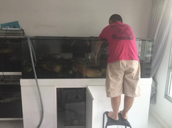 Relocating Livestock to clean tank