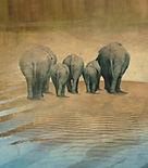 elephant-1064296_1920_edited.jpg