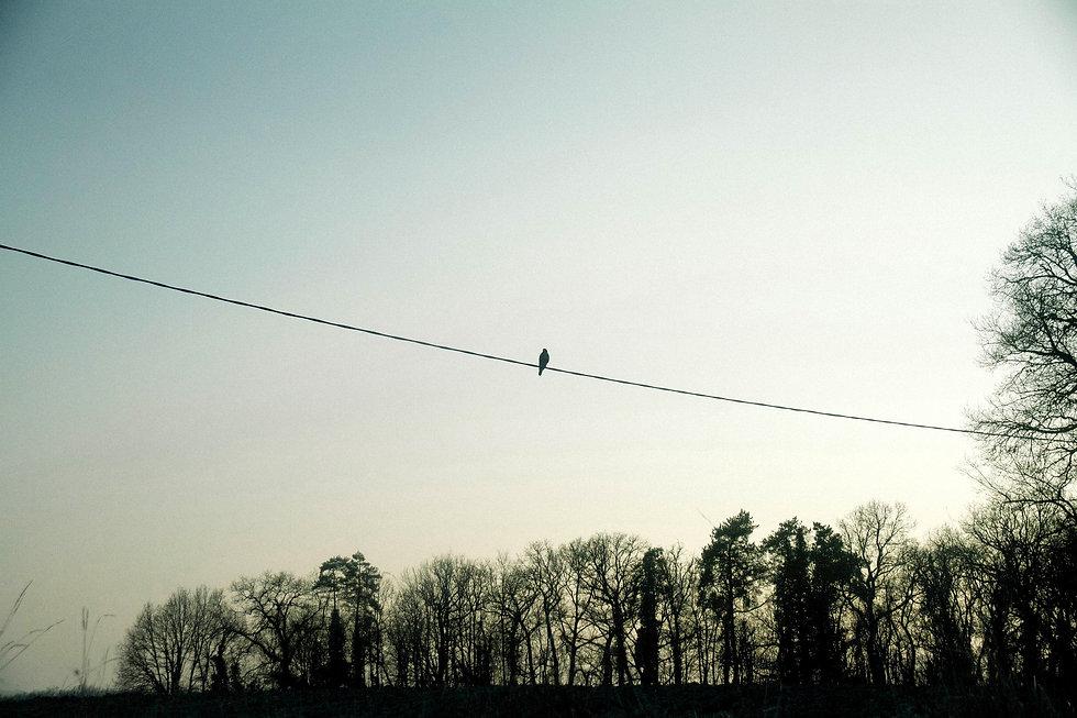 Pizabay cuckoo.jpg