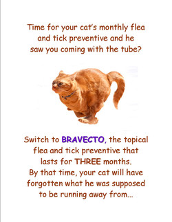 Bravecto feline
