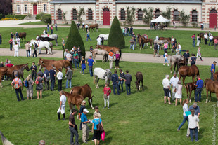 Normandy Horse Day