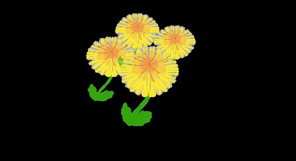 dandelions .png