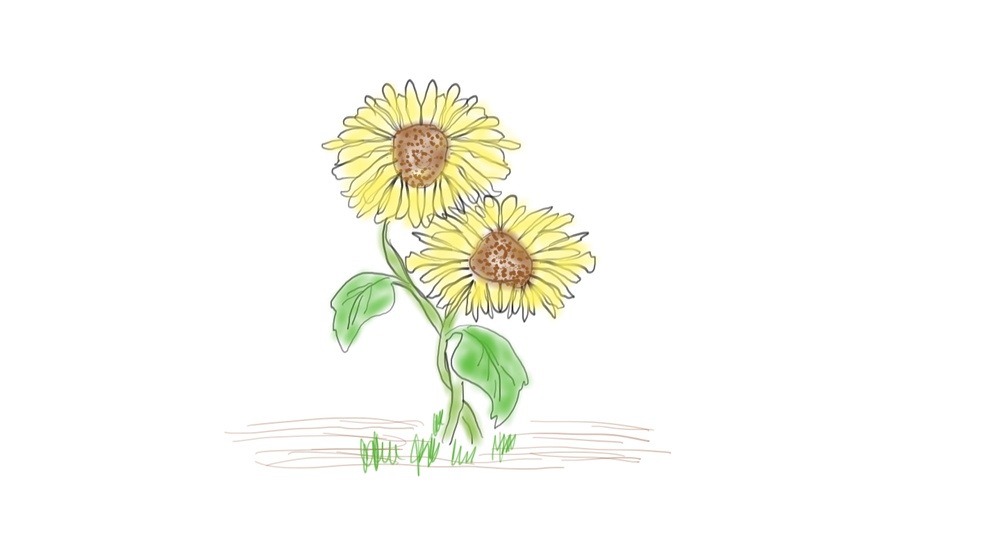 sunflower pair.png