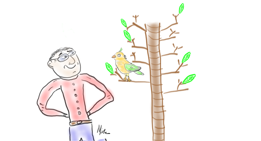 mike looking at bird in tree signed.png