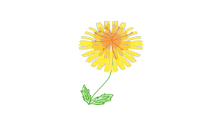 dandelion very good8.png