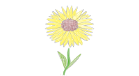 sunflower 1.png